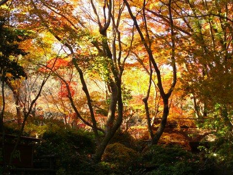 古都=京都の紅葉