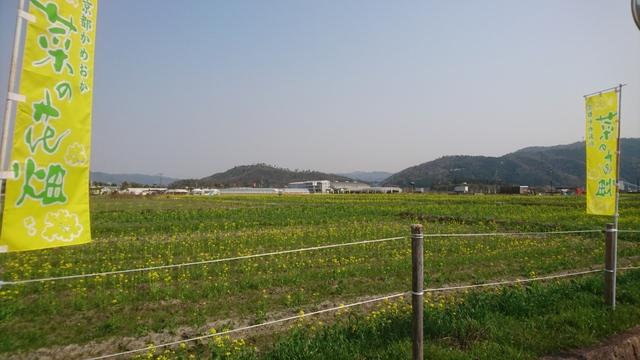京都かめおか 菜の花畑
