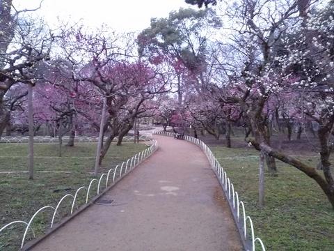 京都市、北野天満宮・梅林