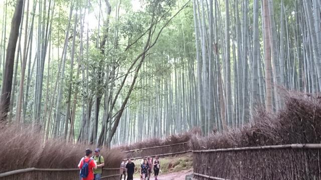 京都市、竹林の小径・竹林の小道