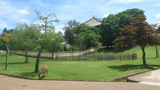 東大寺金堂を背に自由な身の鹿ひとり