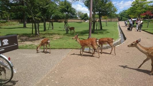 奈良県奈良市 東大寺の鹿