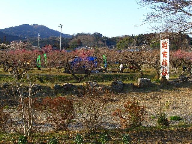 越生梅林 (埼玉県)