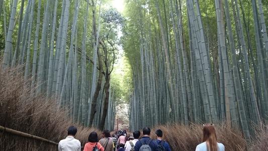 竹林の小路・竹林の道