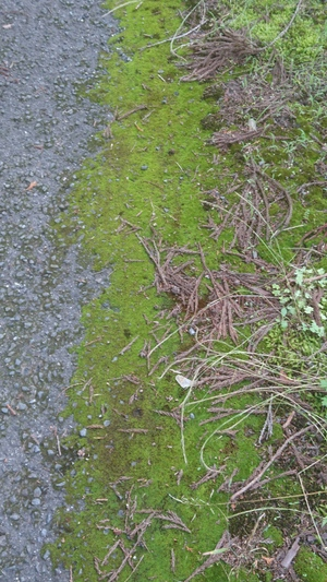 天然の苔の絨毯の上を独り占めで歩く。 アカデミー賞の絨毯より値打ちもの